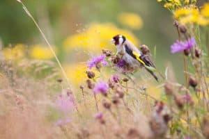 Mon jardin «oiseaux friendly»
